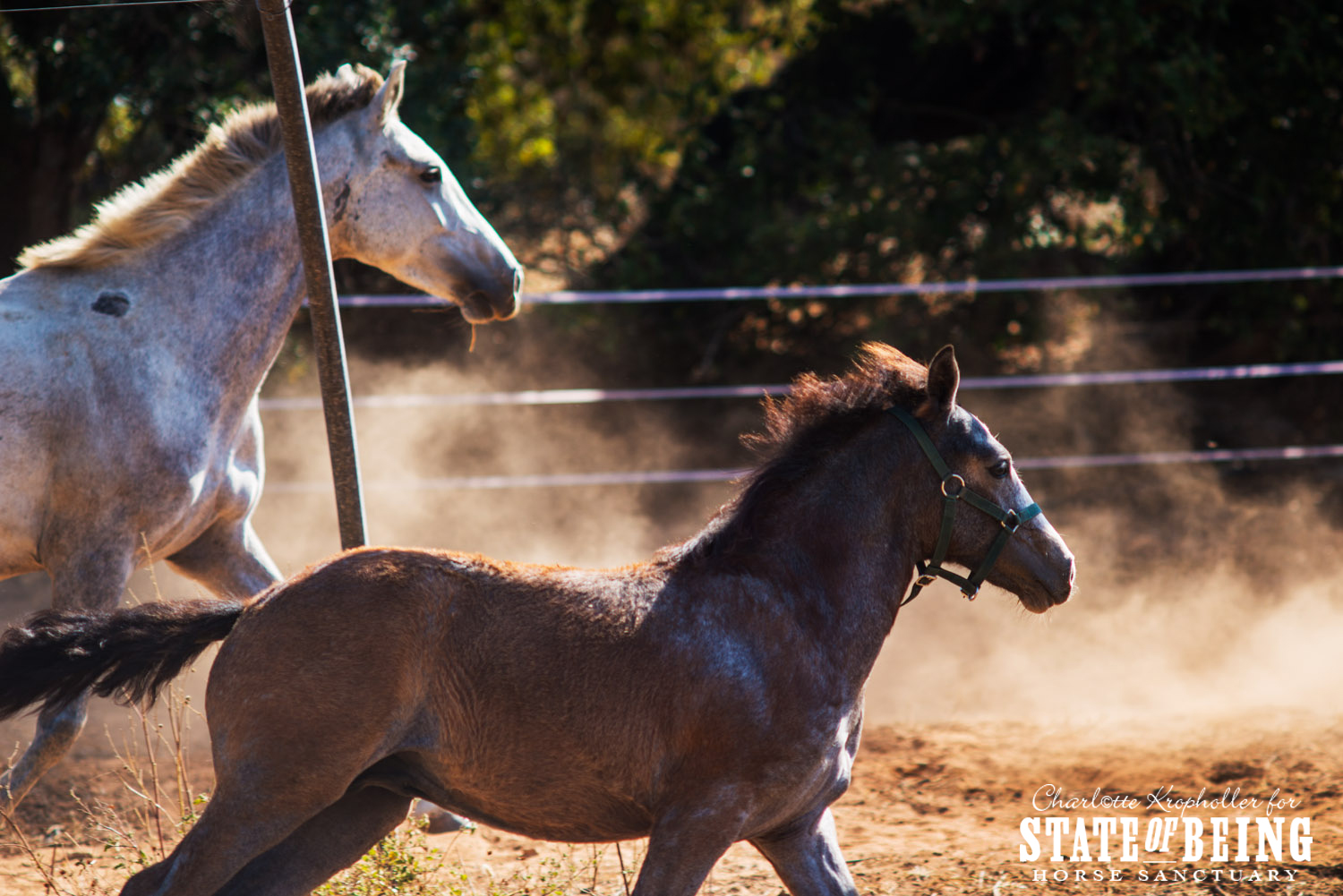 The arrival of Divina, Luciano and Rocky the orphan foal